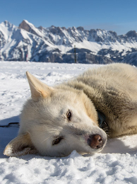Husky adventure